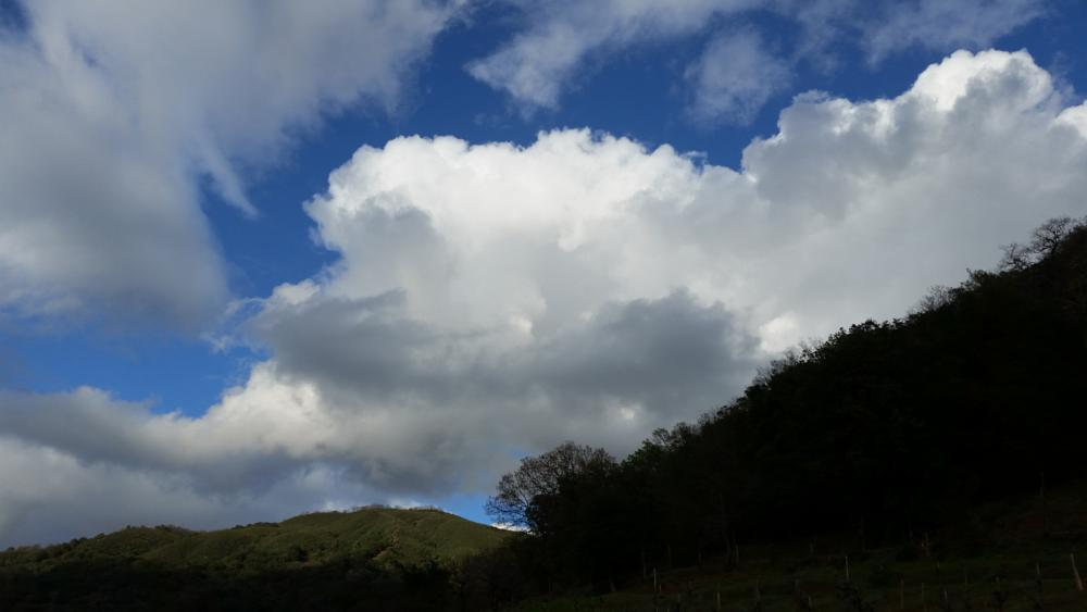 Photo in Landscape #clouds #after rain #cotton candy #puffy clouds