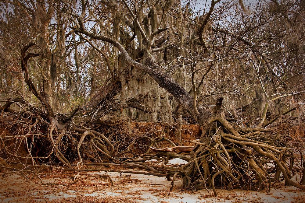 Photo in Landscape #trees #coastal #rustic