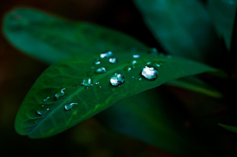 Photo in Macro #drops #water #wet #leaf #pearl