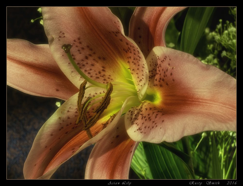 Photo in Still Life #flower #easter #asian lily #easter lily #still life #fine art