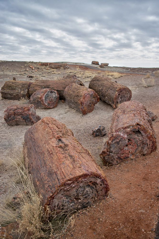 Photo in Landscape #arizona #petrified forest national park #triassic #fossils
