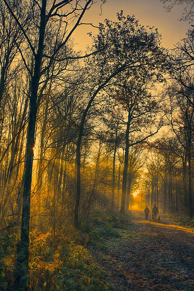 Photo in Landscape #early #morning #forest #walk #woods