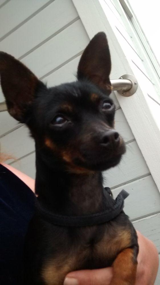 Photo in Animal #dog #pet