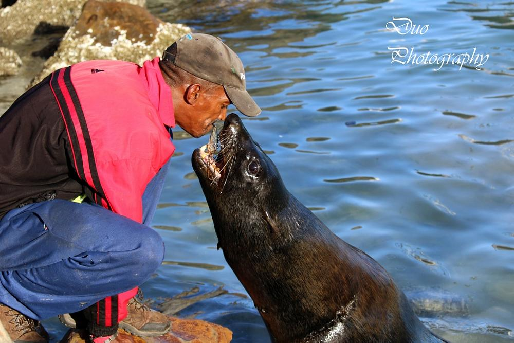 Photo in Nature #seal #sea #fisherman #feeding #fish #brave #crazy #wildlife