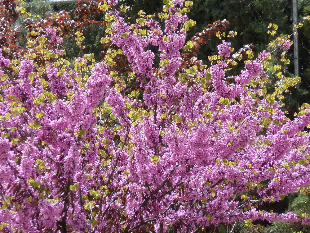 Photo in Random #flower life #flower #fleur #spring #lilac #flores #primavera #lilaceo #printemps #lila #purificacion #nature