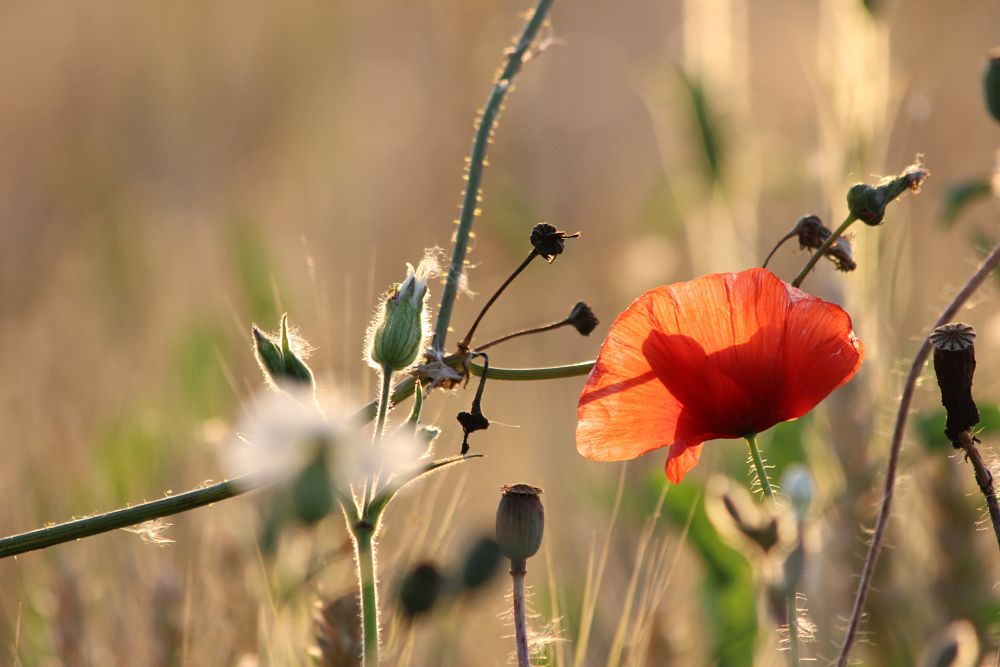 Photo in Nature #stillness #nature #grace