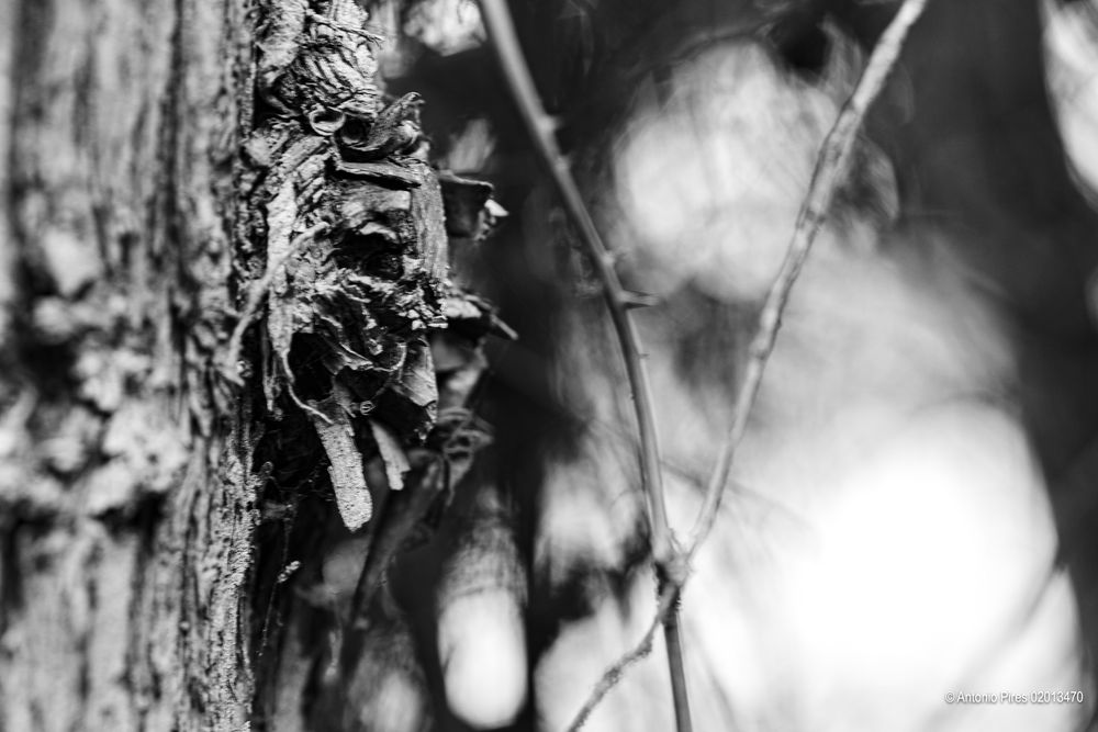 Photo in Black and White #b&w #black & white #abstract #abstract b&w