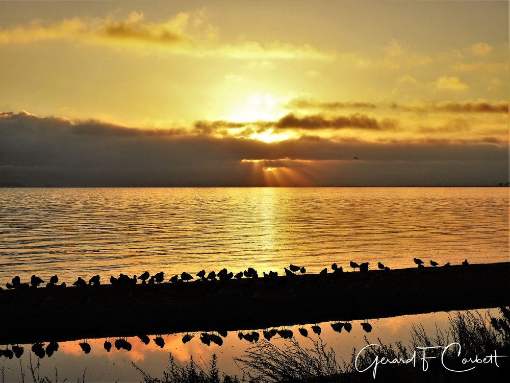 Photo in Landscape #sunrise #sanfranciscobay #fostercity #baytrail #shorebirds #cloudscape