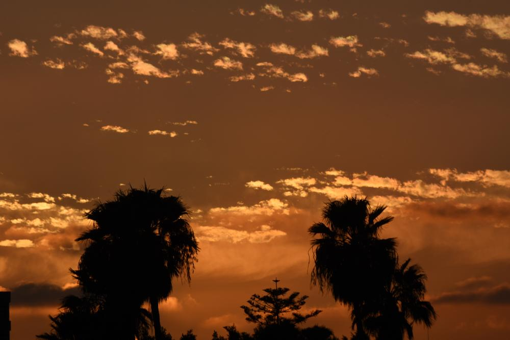 Photo in Nature #sunset #tijuana #palm trees #clouds