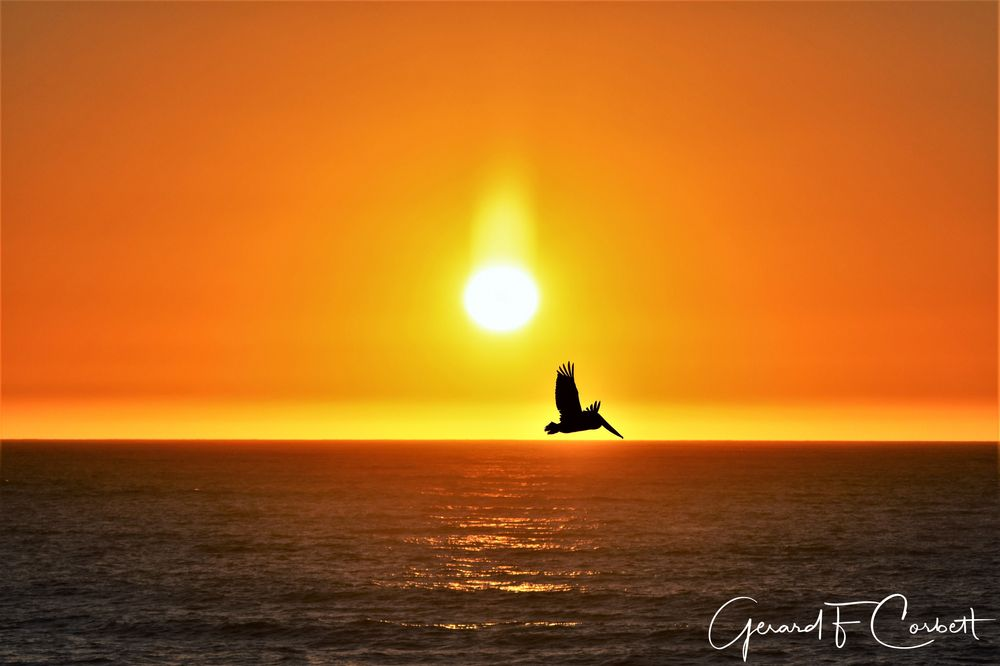 Photo in Sea and Sand #sunset #pacificocean #sharpparkbeach #pacifica #pelican #cloudless