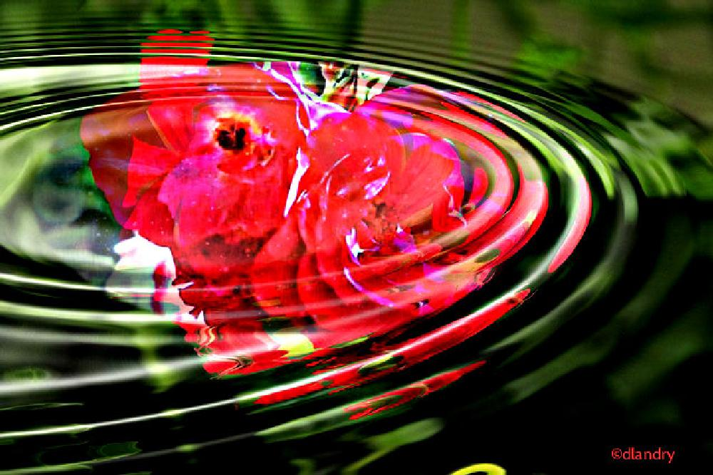 Photo in Abstract #photograhy #photographie #reflet #reflexion #fleur #flower #artistic #water