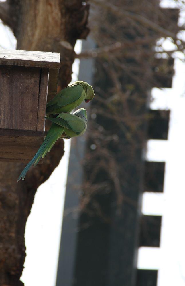 Photo in Random #parrot #bird #love #support #nature