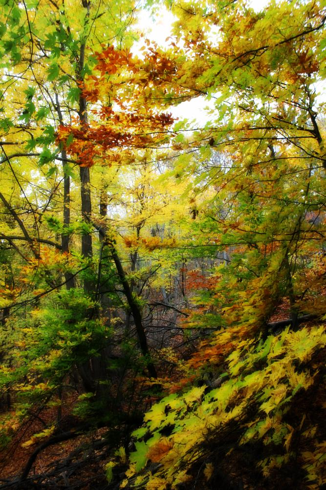 Photo in Landscape #trees #autumn #leaves