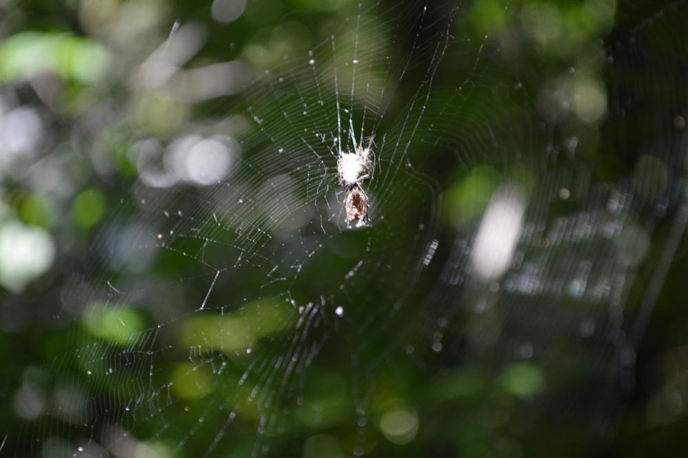Photo in Rural #spider #summer #web