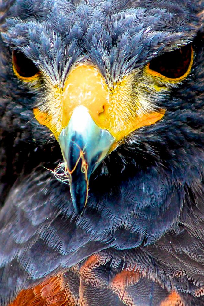Photo in Animal #bird #beak #scotland