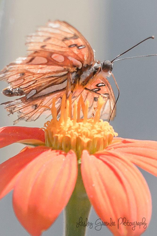 Photo in Macro #butterfly #flower #nature #macro