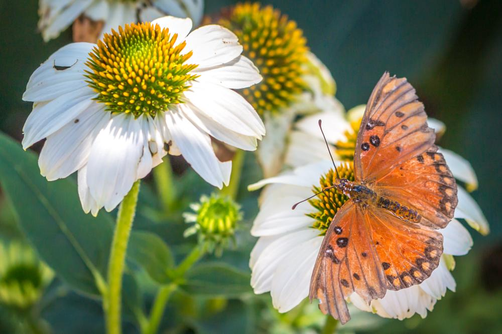 Photo in Nature #butterfly #flower #nature