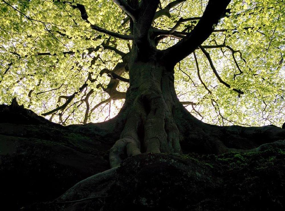 Photo in Rural #tree #dark #mystic #walks #nature #nexus5