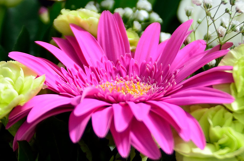 Photo in Macro #flower #close up #home studio #nikon d7000 #tamron 17 50 f/2.8