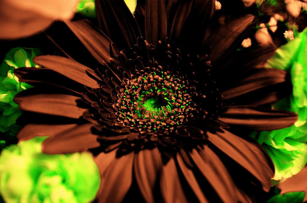Photo in Macro #flower #makro #close up #nikon d7000 #tamron 17/50 f2.8