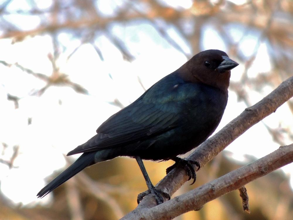 Photo in Animal #animal #nature #bird