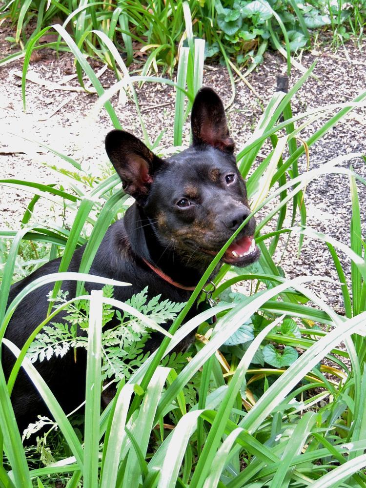 Photo in Animal #pet #dog #animal