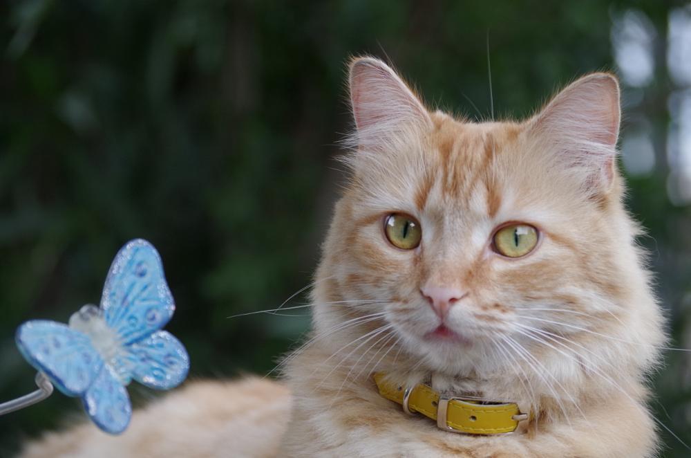 Photo in Animal #cat #family