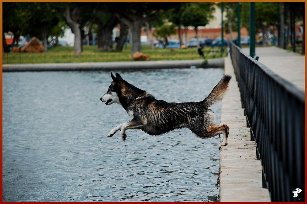 Photo in Random #agua #málaga #salto
