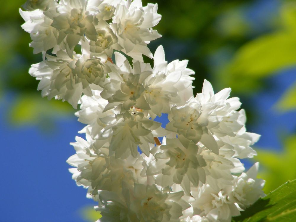Photo in Nature #white #flower #white flower #tree #plant #nature