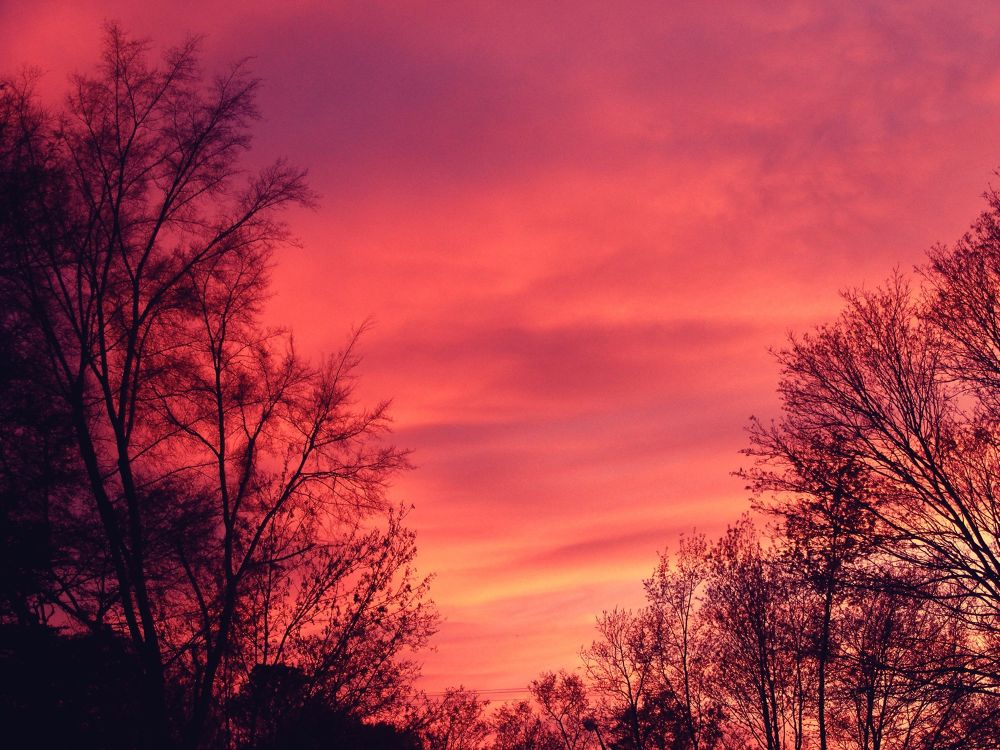Photo in Landscape #pink #sunset #pink sunset