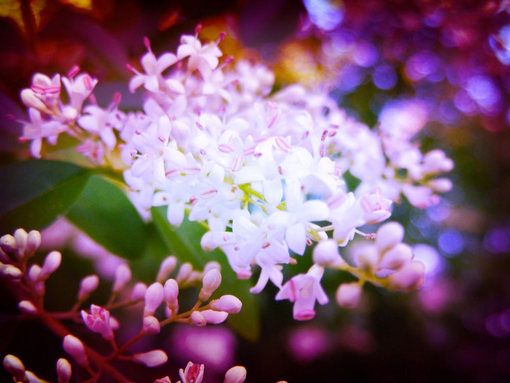 Photo in Nature #white flowers #nature