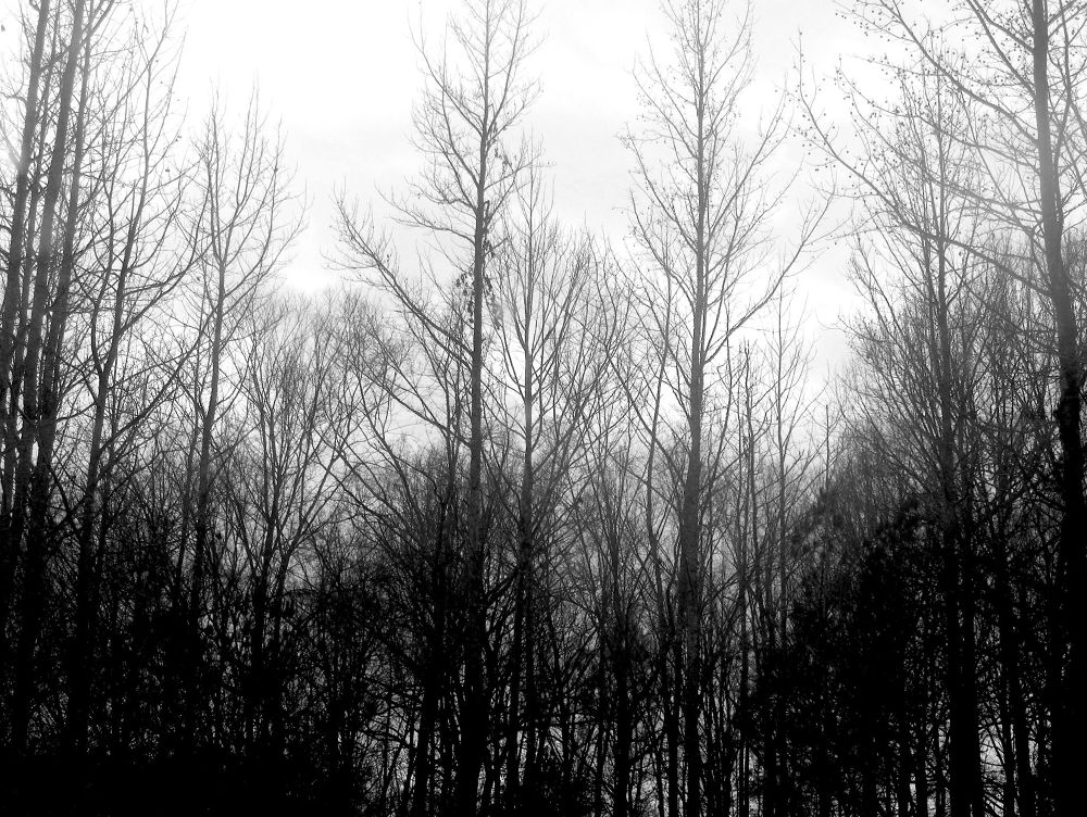 Photo in Landscape #cloudy day #winter #trees #overcast #landscape