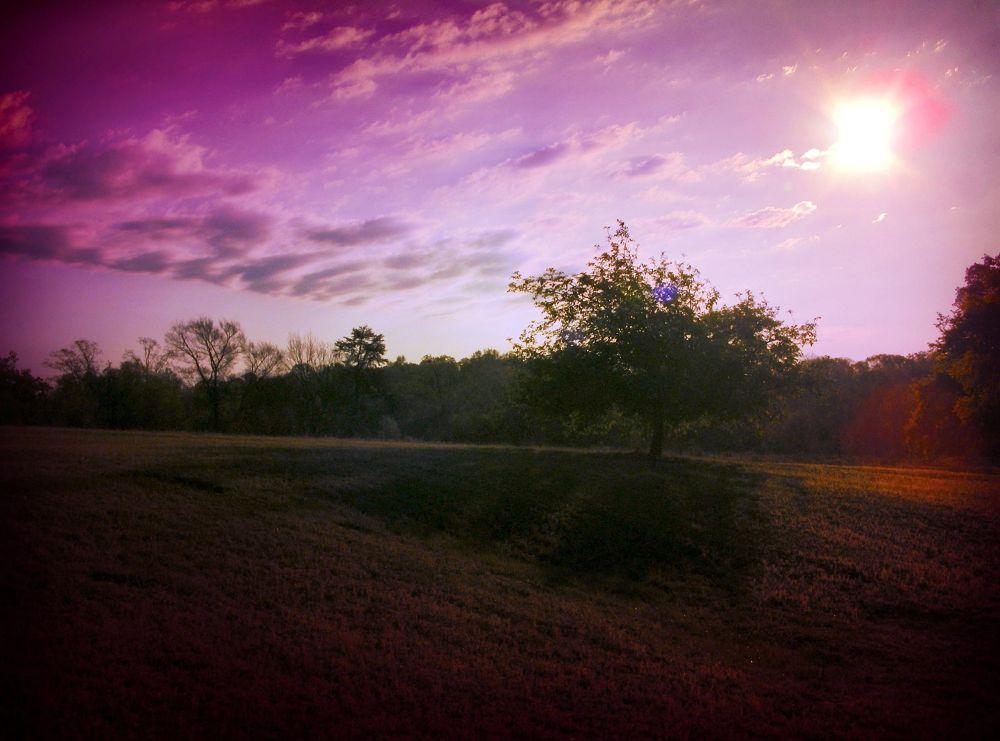 Photo in Landscape #sunrise #sun #apple tree #hill #landscape
