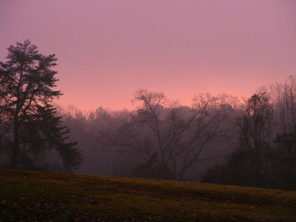 Photo in Landscape #pink #pink haze #rain #fog #trees #landscape