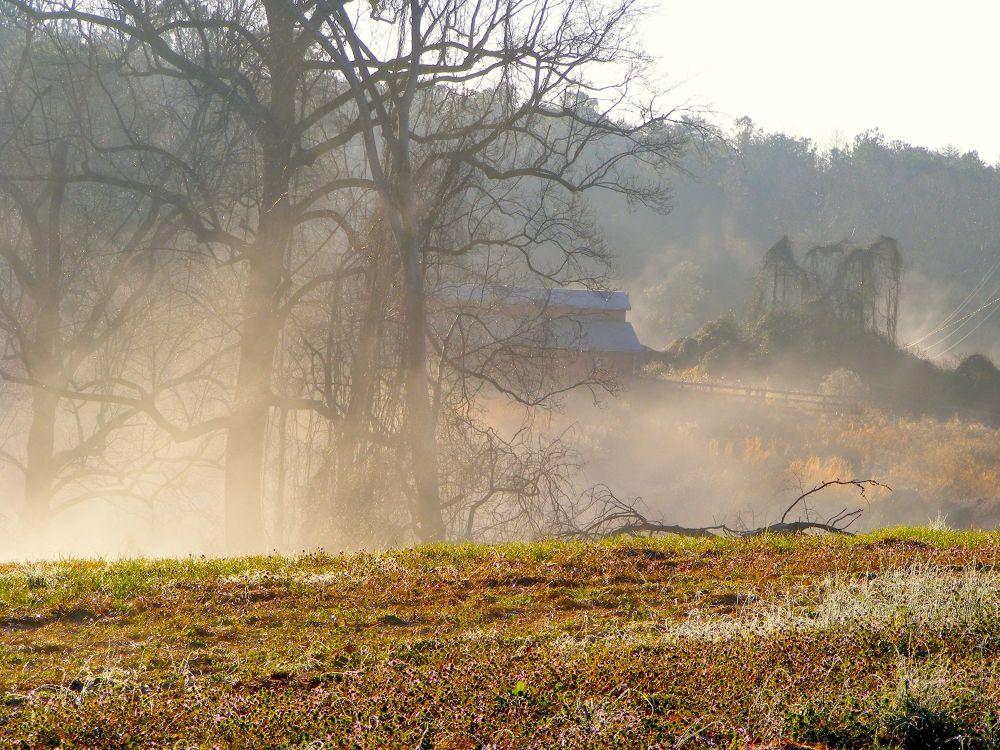 Photo in Landscape #fog #barn #morning #landscape