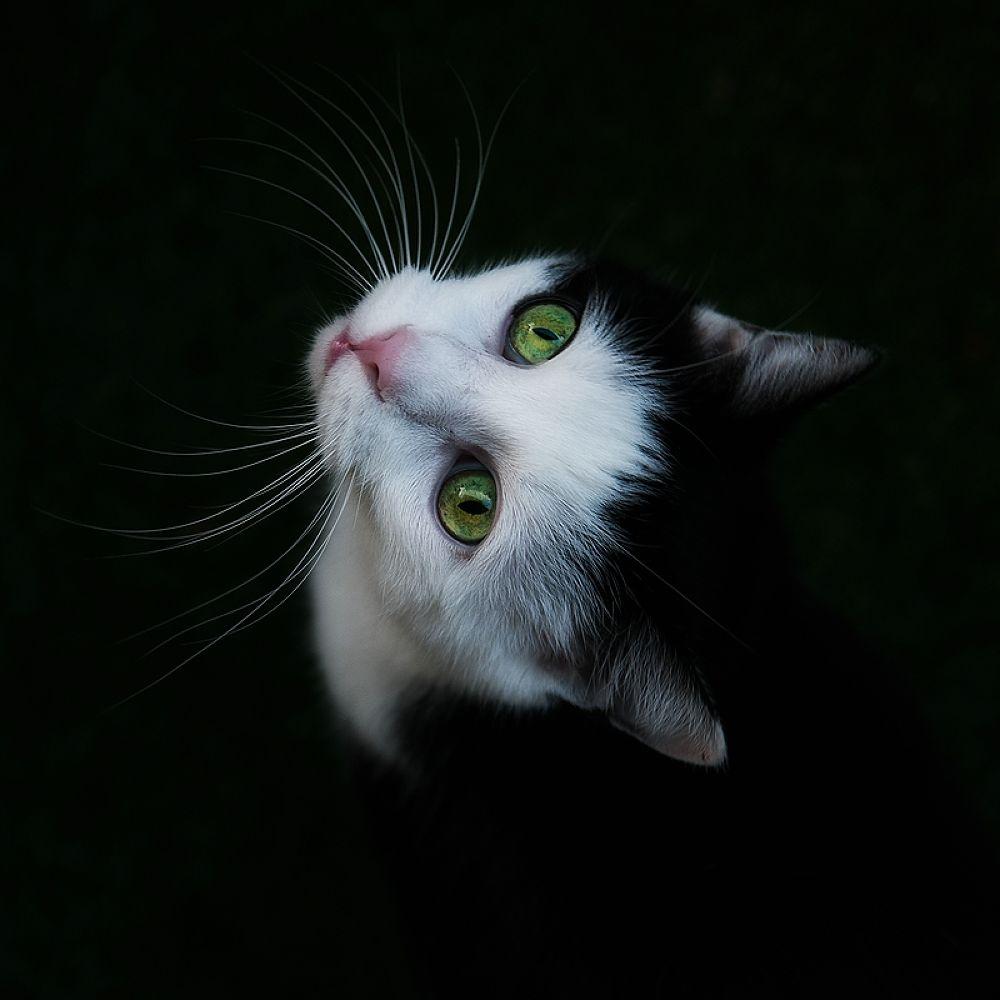 Photo in Random #cat #katze #kater