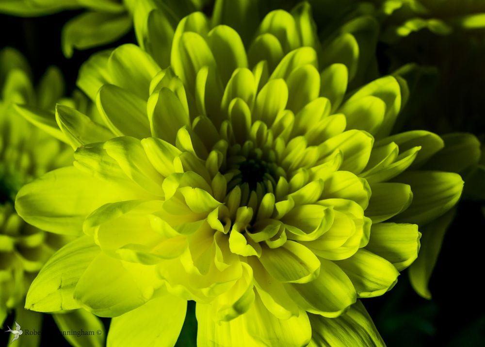 Photo in Macro #yellow #petals