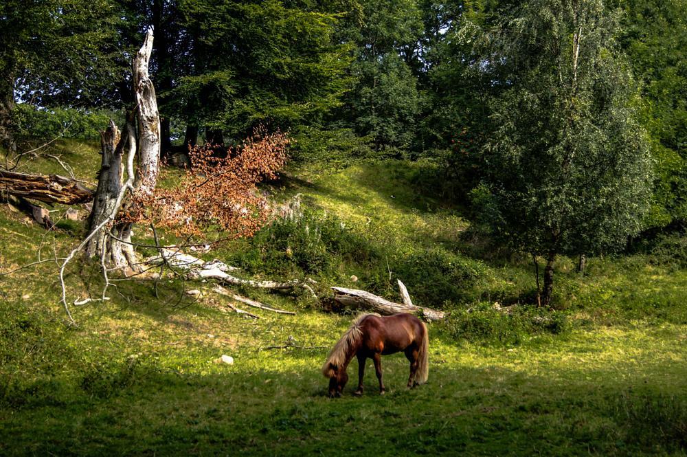 Photo in Random #horse #tree #weed