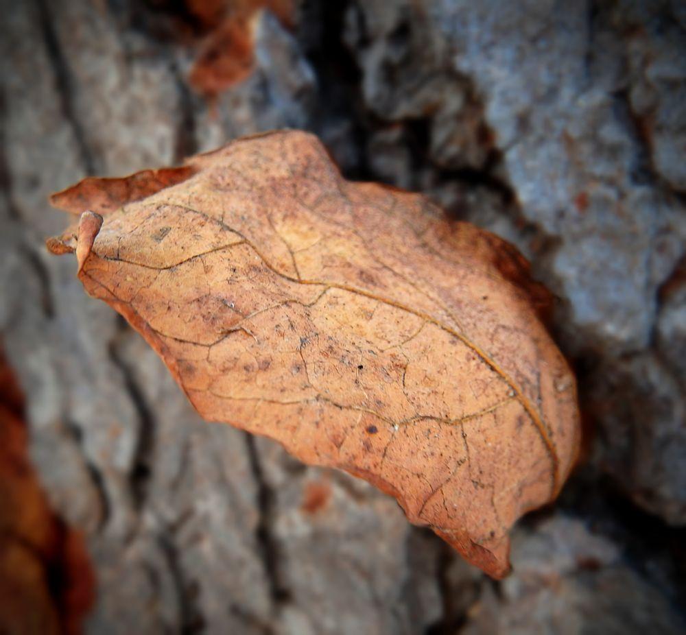 Photo in Nature #fall #leaf #nature #macro #leaf veins
