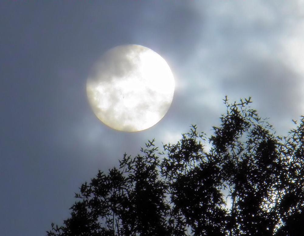 Photo in Nature #moon #tree #clouds #cloud #trees #moonlight