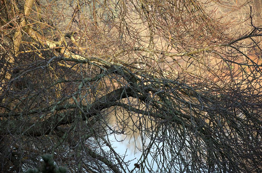 Photo in Nature #branches #reflections #reflets #lake #lac #mervent