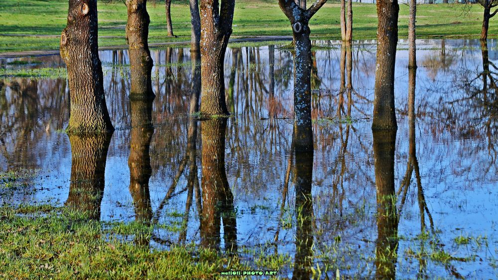 Photo in HDRI #park #urban #water #flood #reflection #tree #croatia #europe #canon