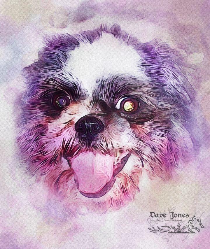 Photo in Random #dog #pet #photoshop #digital