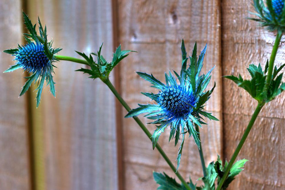 Photo in Journalism #plant #flower