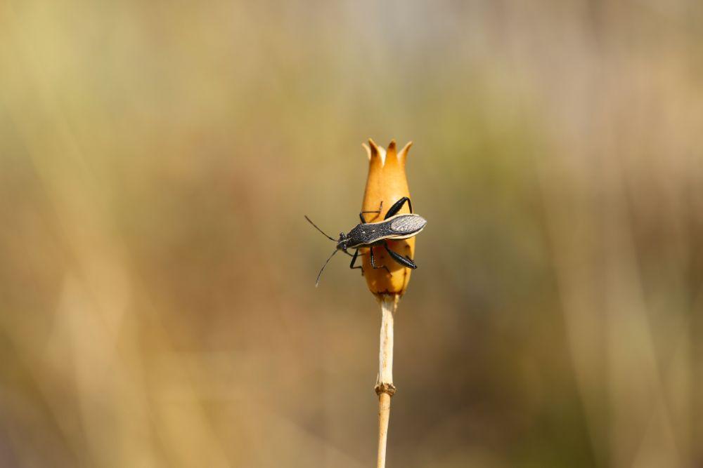 Photo in Macro #macro #insect #basak #bboz #best14