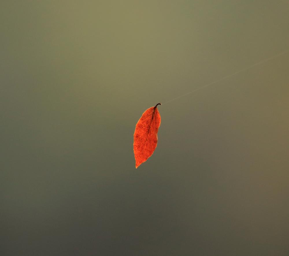 Photo in Fine Art #macro #leaf