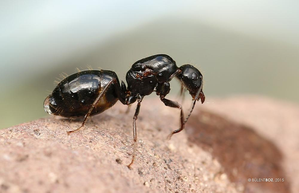 Photo in Macro #ant #giant
