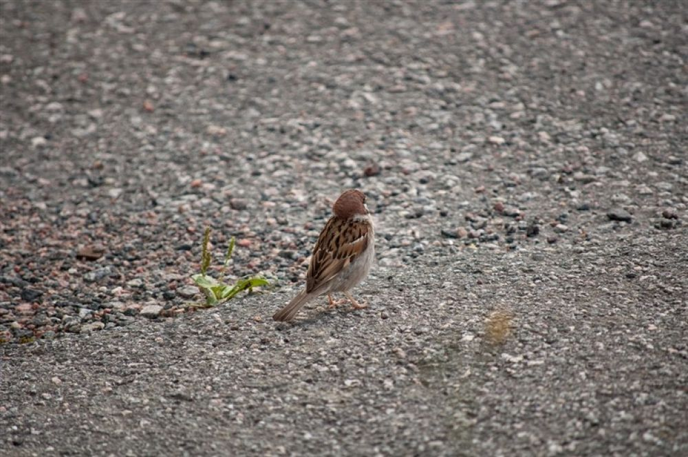 Photo in Random #tree #pilfink #sparrow