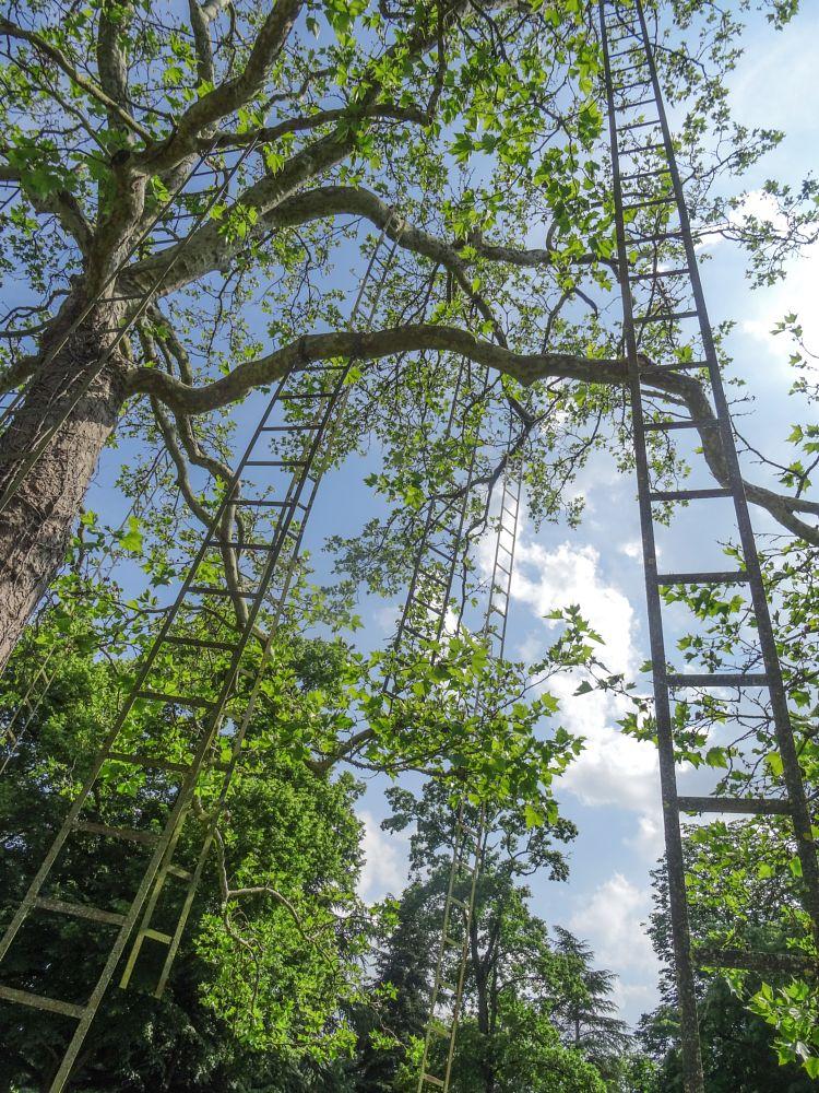 Photo in Random #sculpture #tree #ladder