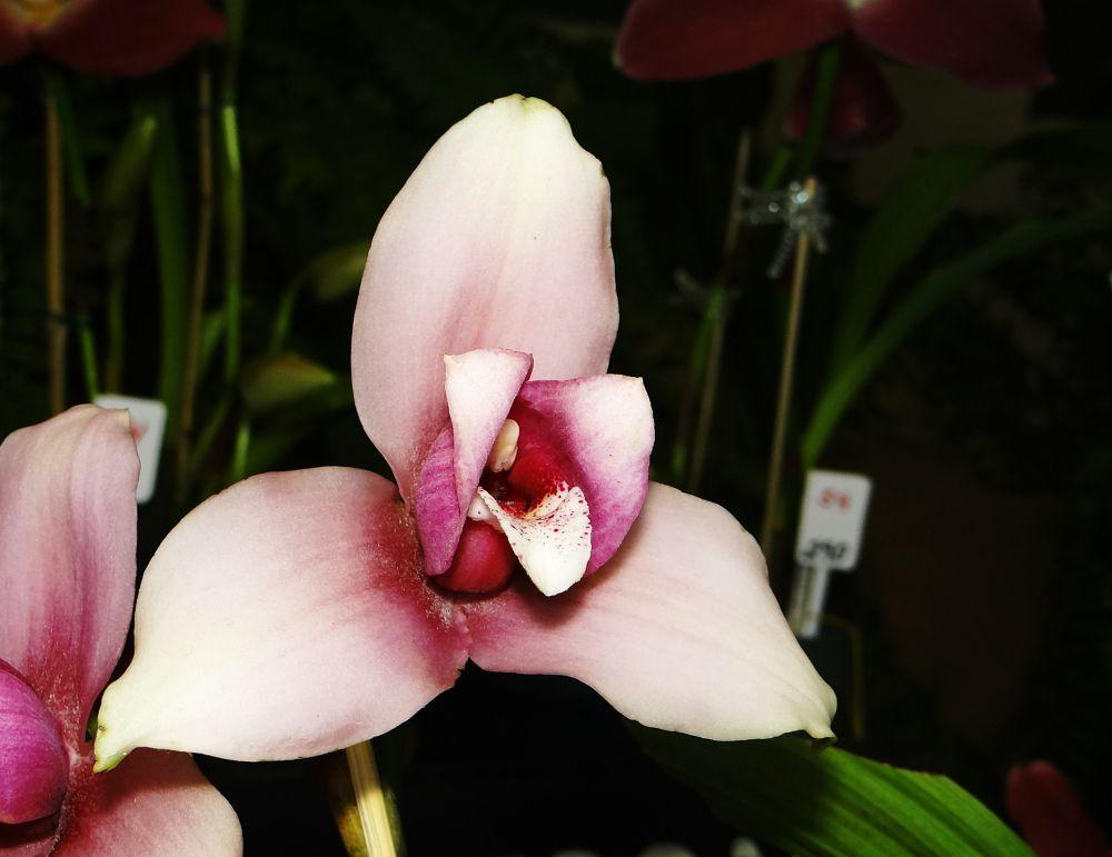 Photo in Macro #orquídeas #flores #guatemala
